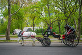 Carriage In Park — Stock Photo