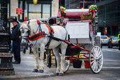 White Horse and Carriage — Stock Photo