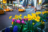 Times Square Spring Planters — Foto Stock