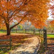 Autumn Walkway — Stock Photo #48135383