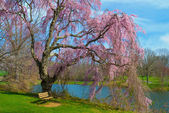 Spring Blossoms Holmdel Park — Stock Photo