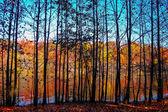 Através da paisagem de árvores — Fotografia Stock