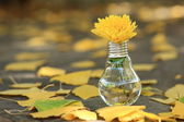 Light bulb with yellow flower — Stock Photo