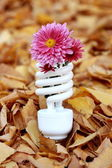 Fluorescent lamp — Stock Photo