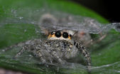 A Hairy Spider — Stock Photo