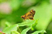 An Orange Moth — Стоковое фото