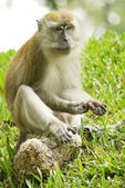 Portrait of a Monkey — Stock Photo