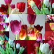 Stock Photo: Collage, flowers