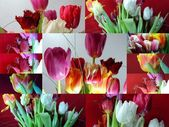 Collage, flowers — Stock Photo