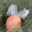 Stock Photo: Fresh egg laying on straw