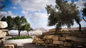 Park in the Arava desert — Stock Photo