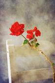 赤いゼラニウム — ストック写真
