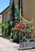 Rose gate — Stock Photo