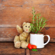Vintage teddy bear — Stock Photo