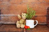Vintage teddy bear — Стоковое фото