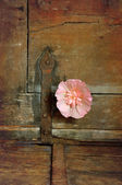 Flower and hinge — Stock Photo