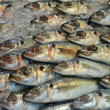 Fish on market — Stock Photo