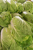 Chinese lettuce on sale — Stock Photo