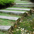 Path in the garden — Stock Photo