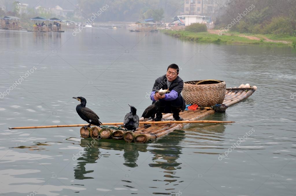 ловля рыбы бакланы япония
