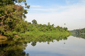 Reflection of green forest on lake in morning — Stock Photo
