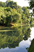 Reflection of green forest on lake — Stock Photo