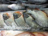 Fish Market — Stock Photo
