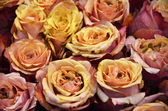 Rustic roses — Stock Photo
