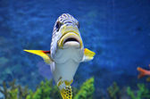 Close up photography of sea fish swims in the deep blue see — Stock Photo