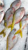 新鲜鱼 — 图库照片