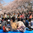 Cherry blossom celebration — Stock Photo