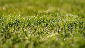 Dew on the grass — Stock Photo