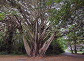 Forest, Killarney National Park, — Stock Photo