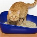 Kitten in blue plastic litter cat — Stock Photo #46232897
