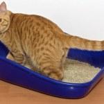 Kitten in blue plastic litter cat — Stock Photo #46232959