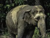 Elephant Photo — Stock Photo