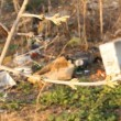 Contamination Of The Environment. Rubbish On Nature — Stock Video