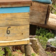 Bee hive — Stockvideo