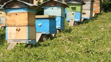 Hive. The bees in the apiary — Stock Video