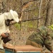 Spring works on an apiary. beekeeping — Stock Video