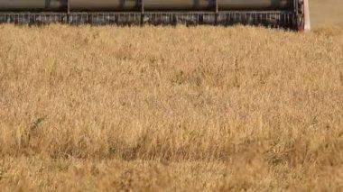 Ufa, RUSSIA - AUGUST 22, 2013: A combine harvester (header) harvesting an oats crop near Ufa, Russia — Stock Video