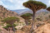 Socotra — Stock Photo