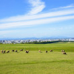Sheeps farm in Sapporo Japan1 — Stock Photo #41246337
