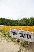 Flower in Tomita Farm Japan — Stock Photo
