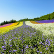 Colorful flower in row with blue sky7 — Stock Photo #41361667