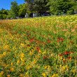 Row of colorful flowers with sunshine4 — Stock Photo #41367381