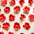 A lot of red camellia flowers on white background — Stock Photo #41618291