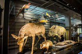 Stuffing animals in National Museum of Nature and Science Japan — Stock Photo