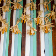A lot of dry corns on wooden wall1 — Stock Photo