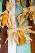 A lot of dry corns on wooden wall3 — Stock Photo